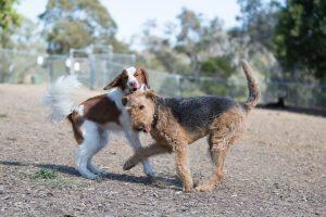 Dog Training Queanbeyan