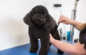 Pups4Fun dog grooming canberra