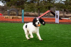 dog daycare canberra