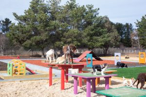 Pups4Fun Dog Daycare Canberra
