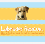 Proud Supporter of Lab Rescue Canberra