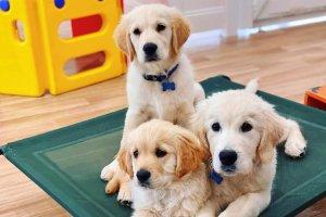 Pups4Fun puppy class